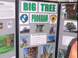 Big Tree Exhibit