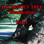 Hazardous Trees - Part 1