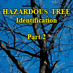 Hazardous Trees - Part 2