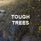 Tough Trees