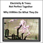Electricity & Trees:<br>Not Perfect Together