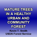 Mature Trees in Healthy Urban & Community Forest